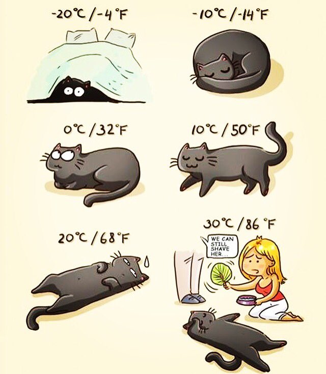 CAT #FORECAST      #HOWTO #Predict the #weather by your cat's #posture #catsoftwitter #retweet #lol #cats #cat #catlover #catfan<br>http://pic.twitter.com/EIYWtohOfV