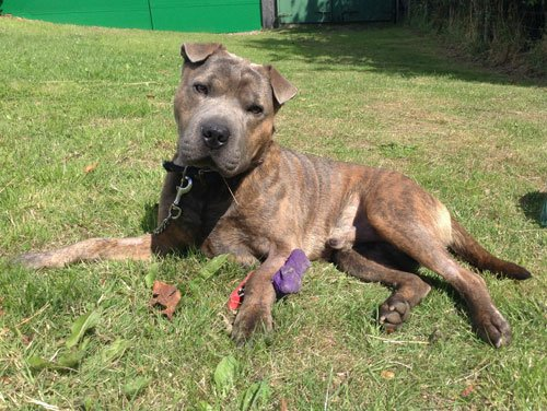 #WestYorkshire This is Bruce at Whitehall Dog Rescue. He is a Sharpei cross that was born approx mid 2012. He ...  http:// rescuedogs.org.uk/dog-rescues/yo rkshire-humberside/whitehall-dog-rescue/bruce-shar-pei-cross &nbsp; … <br>http://pic.twitter.com/BZeF0q8ppU