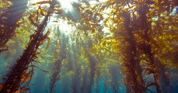 The Energy of Tomorrow May Not Be #Solar, but Seaweed  https:// futurism.com/the-energy-of- tomorrow-may-not-be-solar-but-seaweed/ &nbsp; … <br>http://pic.twitter.com/bdED6MXFbu