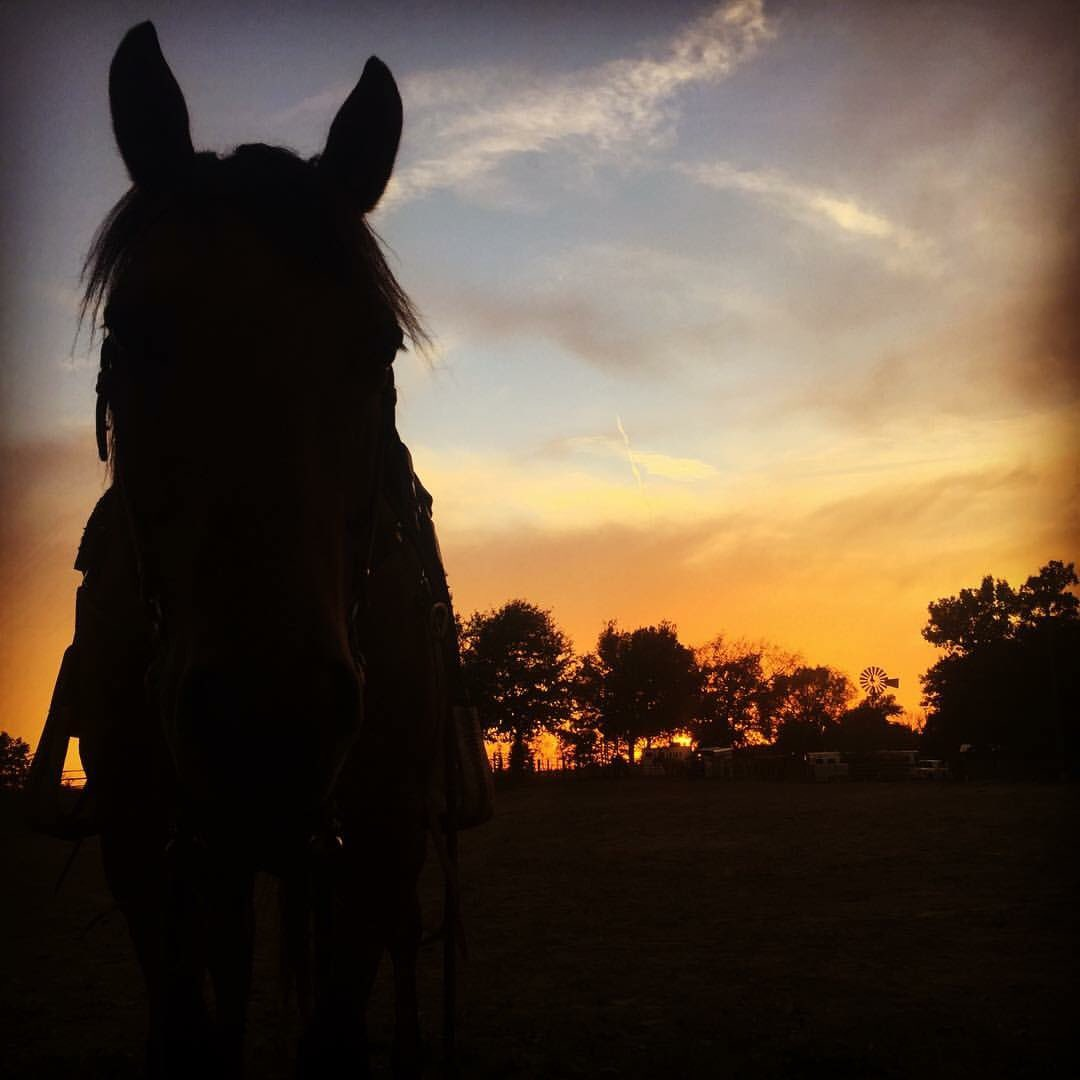 Looking handsome with the sunset Double...