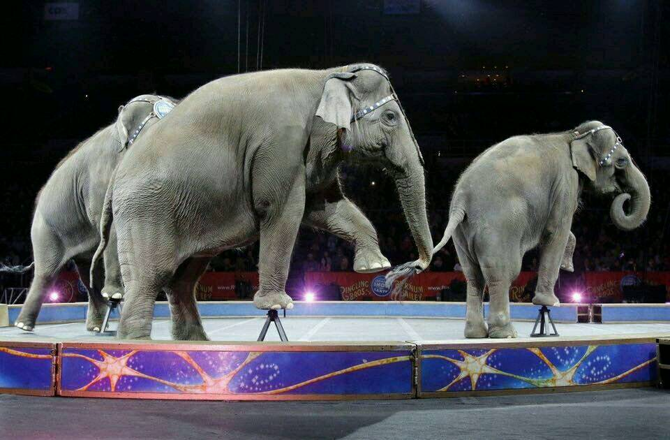 BREAKING: #Elephants Will Never Have To Perform In #NewYork Ever Again  http:// thedo.do/2xUqrkB  &nbsp;  <br>http://pic.twitter.com/aTQbR2Rc6d