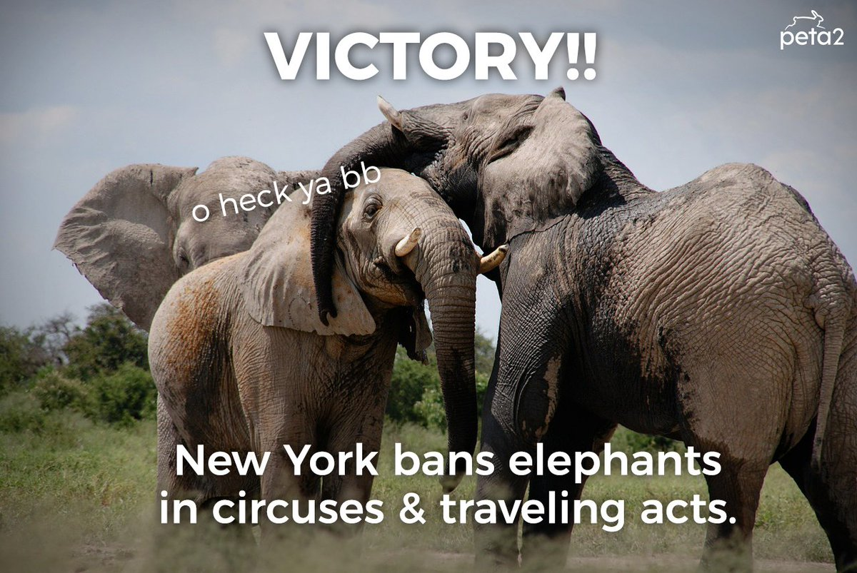 ICYMI: #NewYork has banned using elephants in any circuses, parades, &amp; other traveling shows!  <br>http://pic.twitter.com/49McuaNcwY