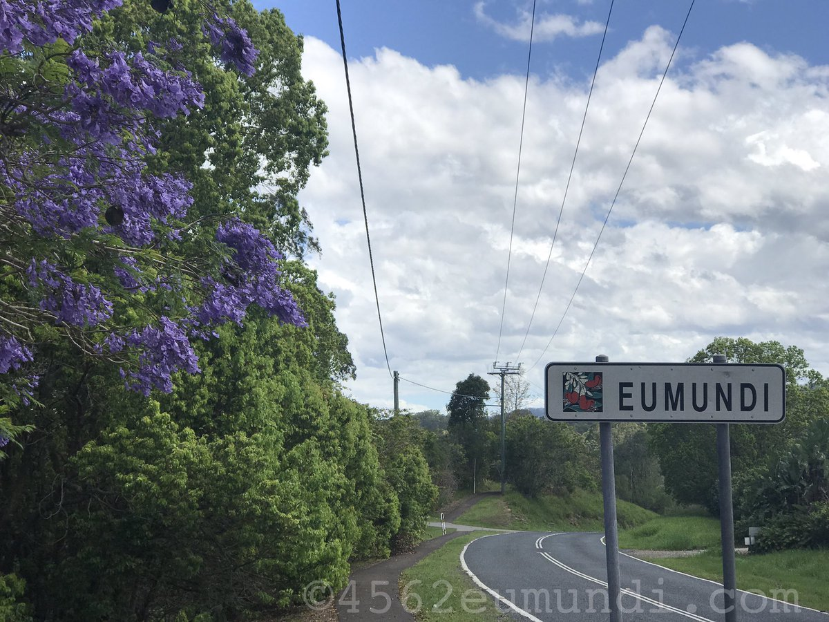 We Jacaranda time in #Eumundi Photo: @GRIDMEDIA #SunshineCoast #Queensland #Australia #QldTraffic #WebDesign <br>http://pic.twitter.com/6E8GXwIhwg