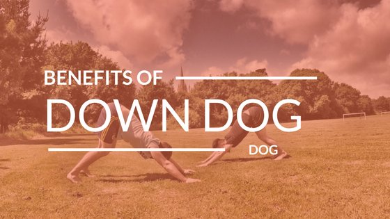 A Few Reasons To Get More DownDogs Into Your Day!     https:// buff.ly/2yqMI8H  &nbsp;   #Yoga #Health #DownDog #Blog #Blogging #Read #Fitness<br>http://pic.twitter.com/IqbRMby1qT
