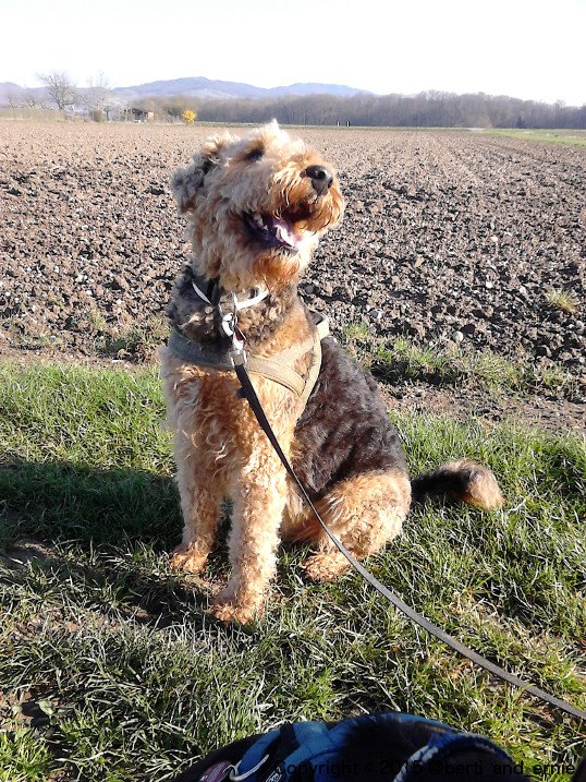 """The dog kind of way to say: """"Don&#39;t worry, be #happy!"""" #dogsarejoy<br>http://pic.twitter.com/qyRqSAJVju"""