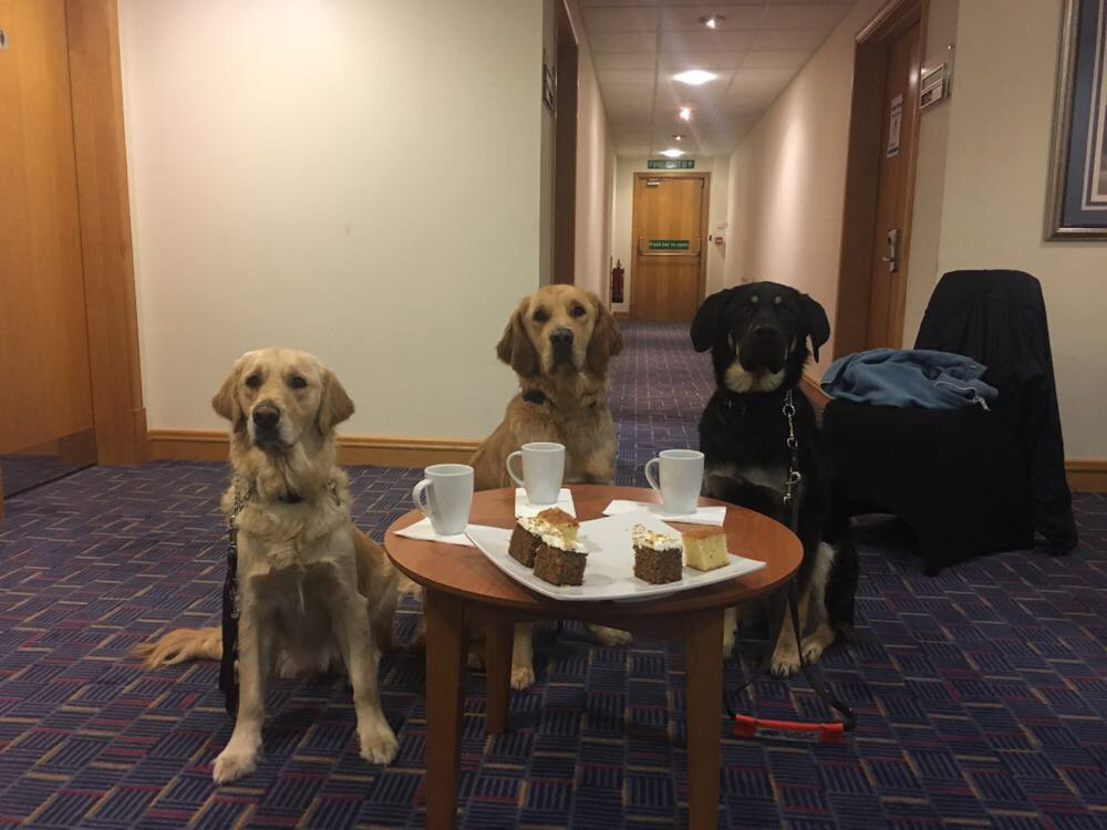 Planning #meeting ready for when our #GuideDogs train with their new owners at @mercureleeds! #GoldenRetrievrer #GSD #GermanShepherd<br>http://pic.twitter.com/i62Mskkoqb