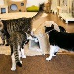 ただの猫カフェじゃない! 捨てネコと飼い主をマッチングする保護猫カフェ「SAVE CAT CAFE」…
