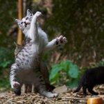 かっこいいいい!!!!バレエ・カンフー・スタンド使い アグレッシブすぎる猫写真集の第2弾『のら猫拳キ…