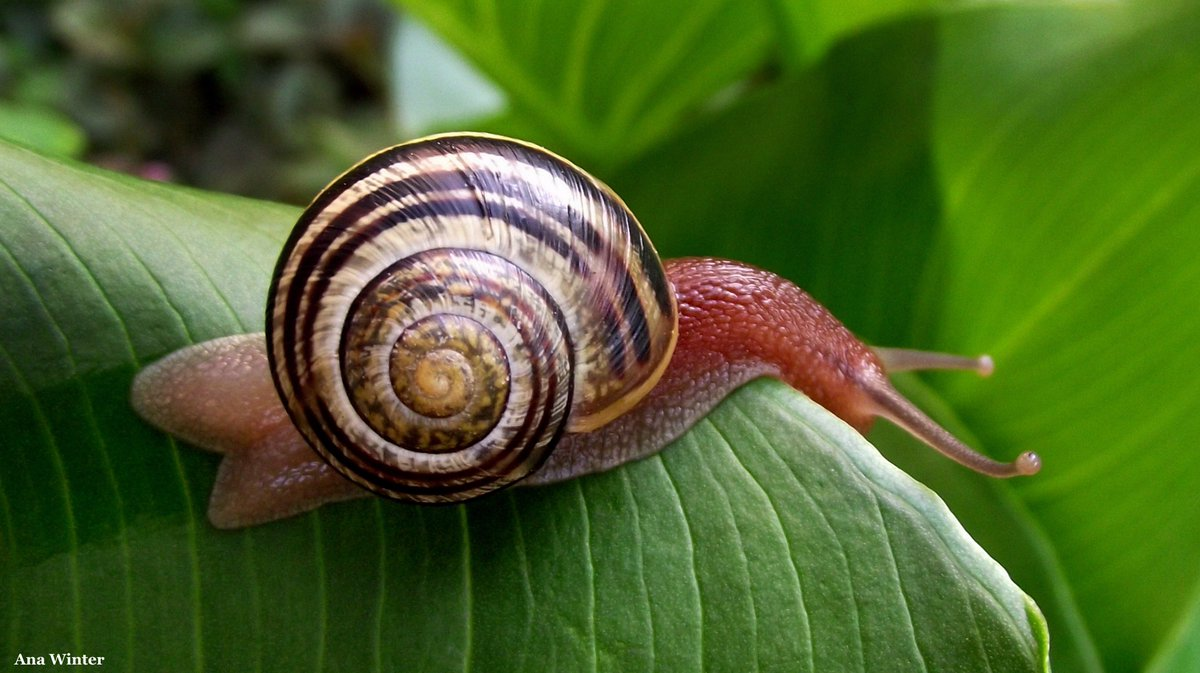 snail hashtag on twitter