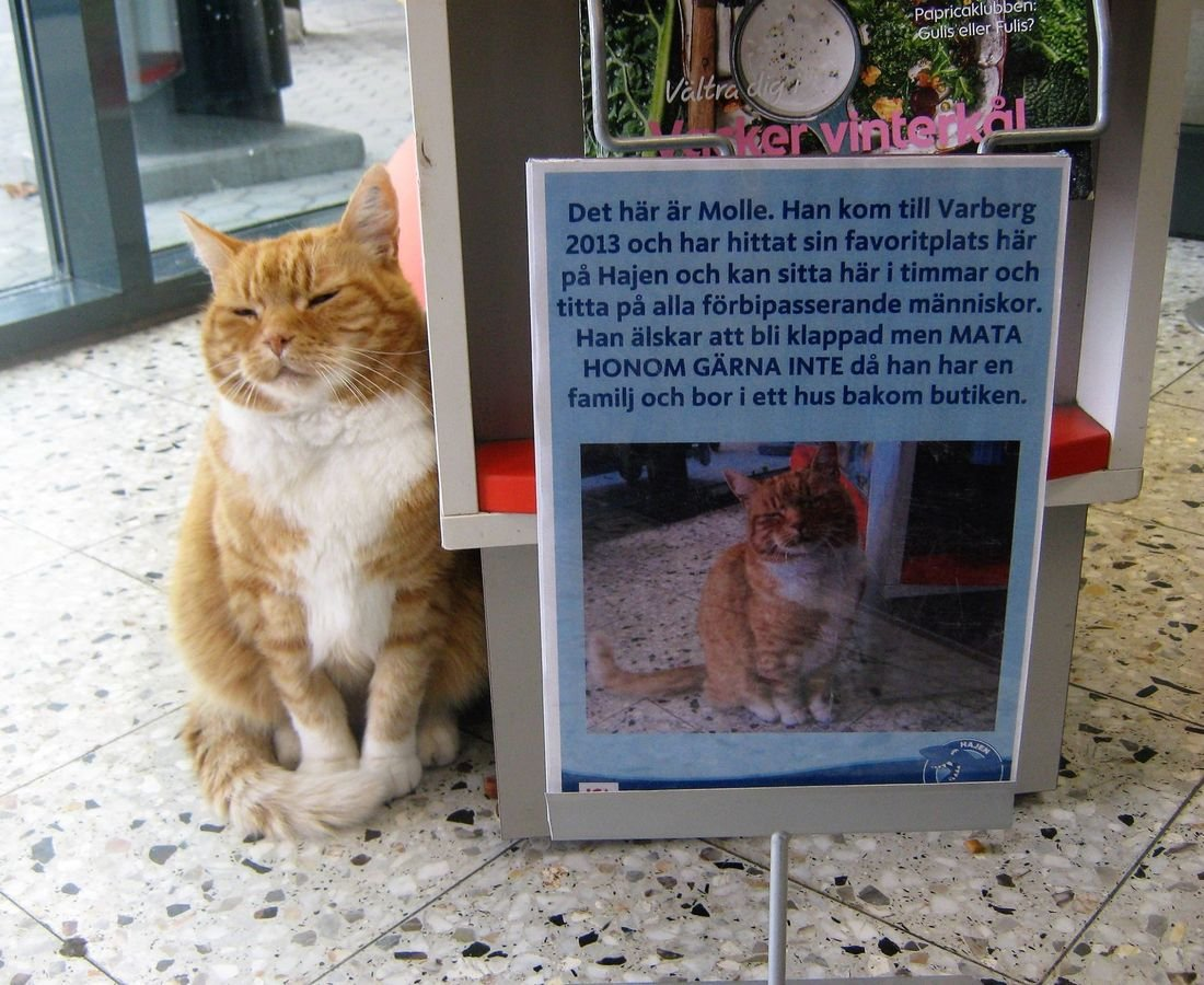 helblinde on twitter swedish cat sits in convenience store to get