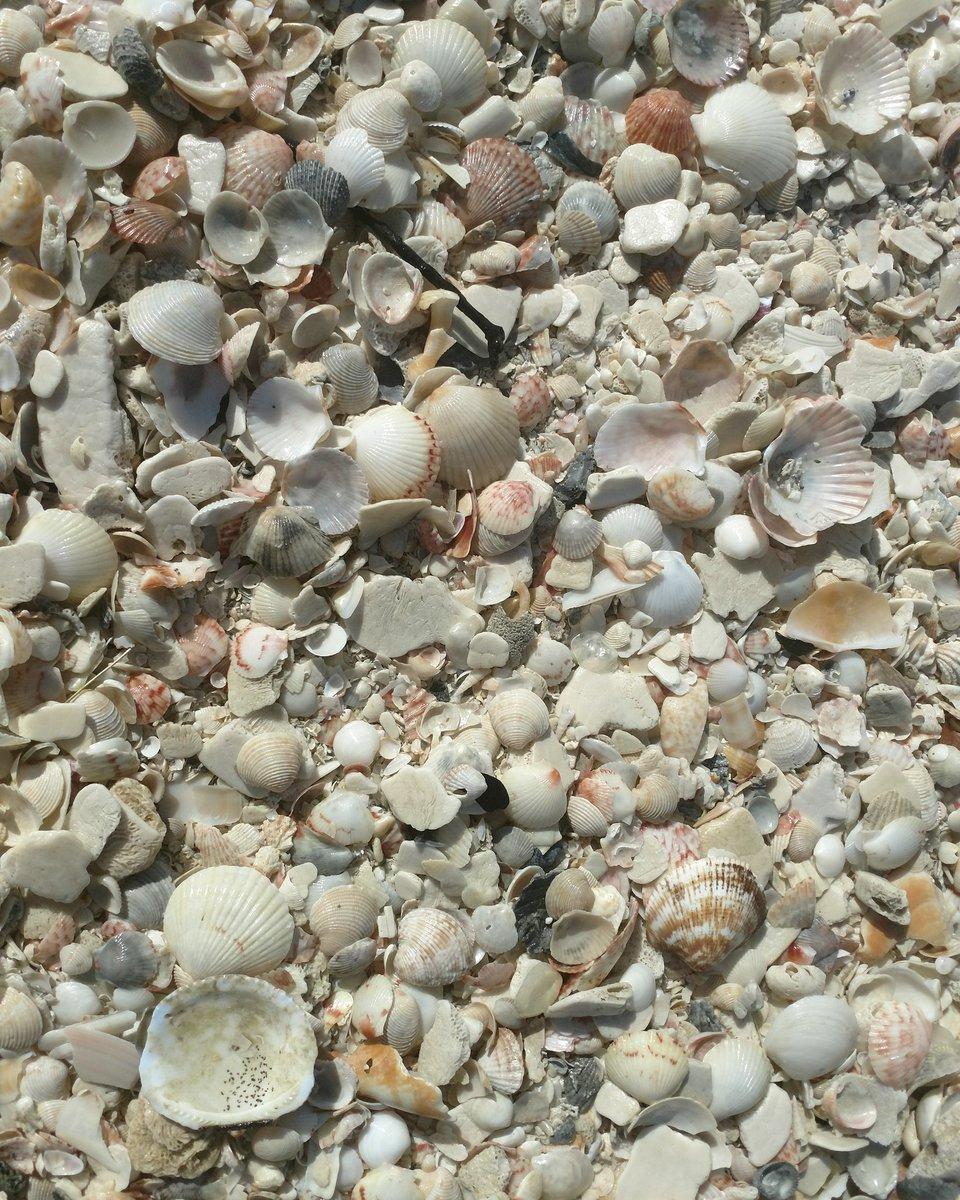 Seashell time in Northwest Florida. #flo...