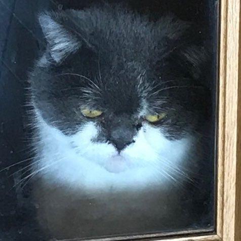 ネコをうっかりと締め出すとこうなるw思いがけず撮れたホラーな一枚www