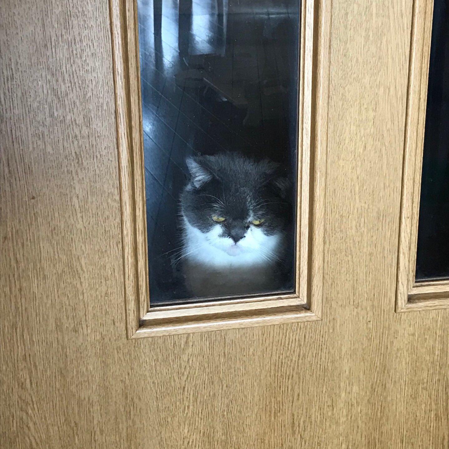 廊下にうちの猫が居ることを知らずに締め出してしまってから1時間後の顔...