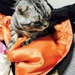 服を引っ張ってきて自分のベッドにしがち。猫あるある。こんばんは。 pic.twitter.com/q…