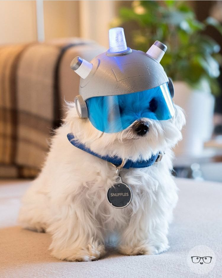 Real life Snuffles  https://t.co/HZBCltp...
