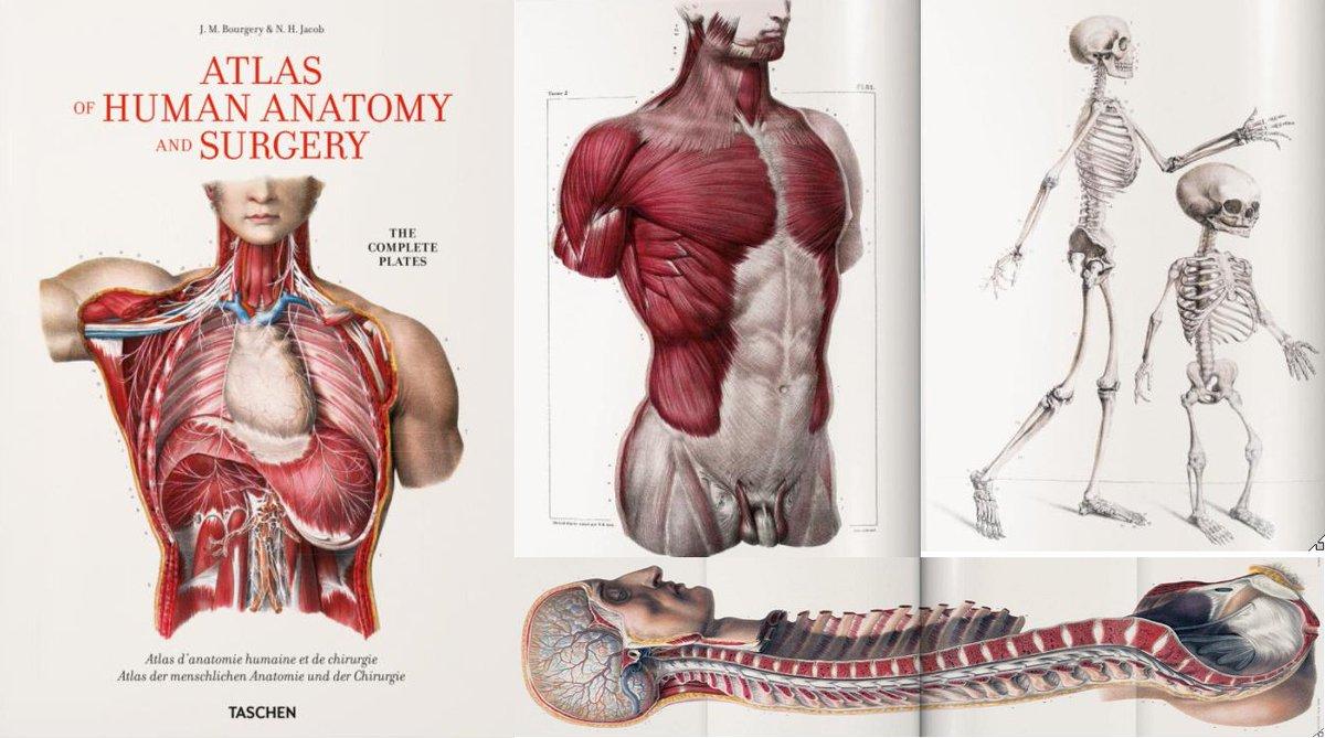 Großartig Anatomiemodell Kanada Fotos - Anatomie Ideen - finotti.info