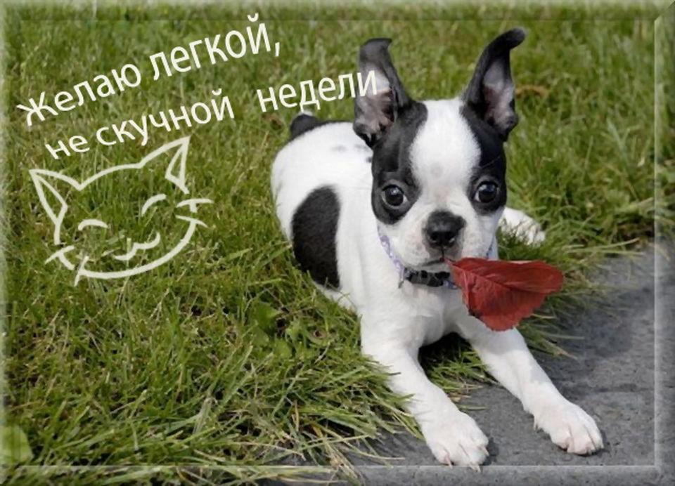 Веселые открытки с собаками с пожеланием хорошего рабочего дня, днем