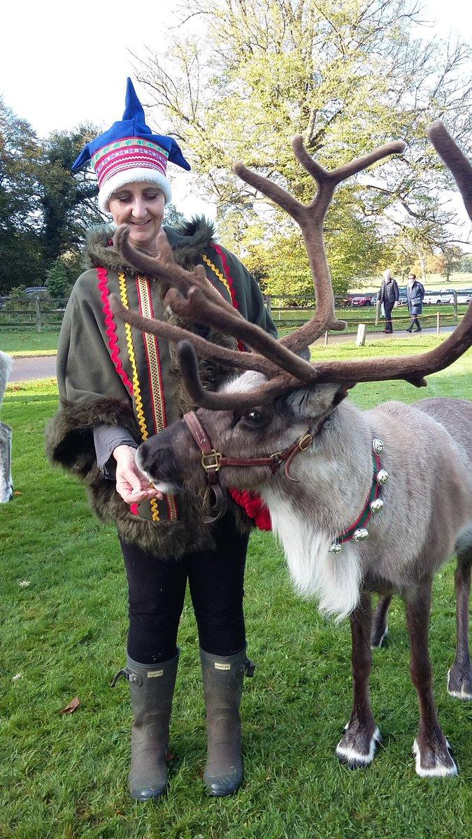 randwick reindeer rreindeers twitter