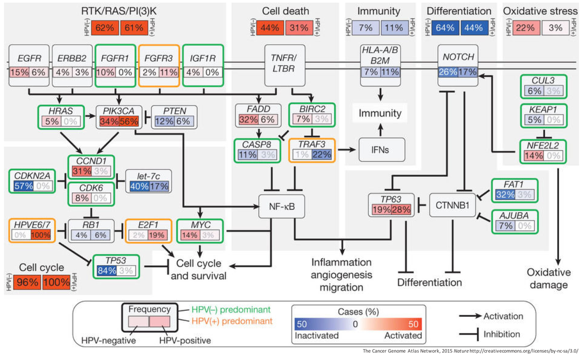 pdf Foreign Compound Metabolism in Mammals
