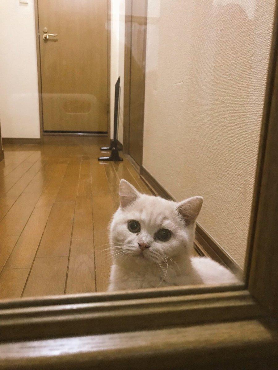 廊下に行くときみかんが後ろ着いて来てることに気づかずドア閉めてたらドアの向こうでソワソワしてた。 pic.twitter.com/WW3MVqI3HL