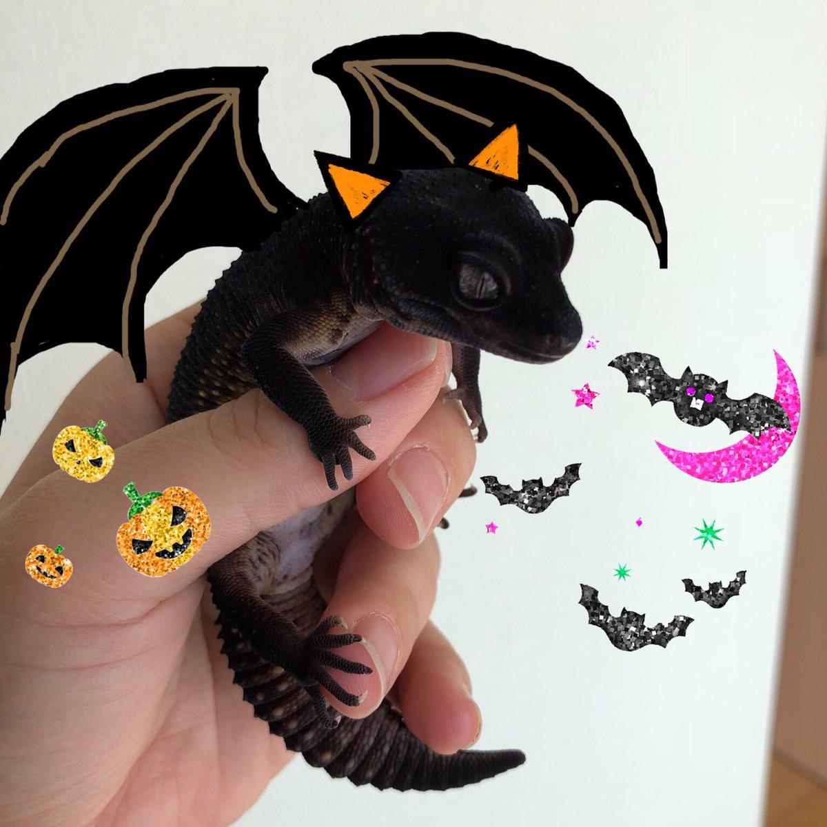 もうすぐハロウィンだ ❣️  今日はちびドラゴン捕まえたょ( ^ω^ )