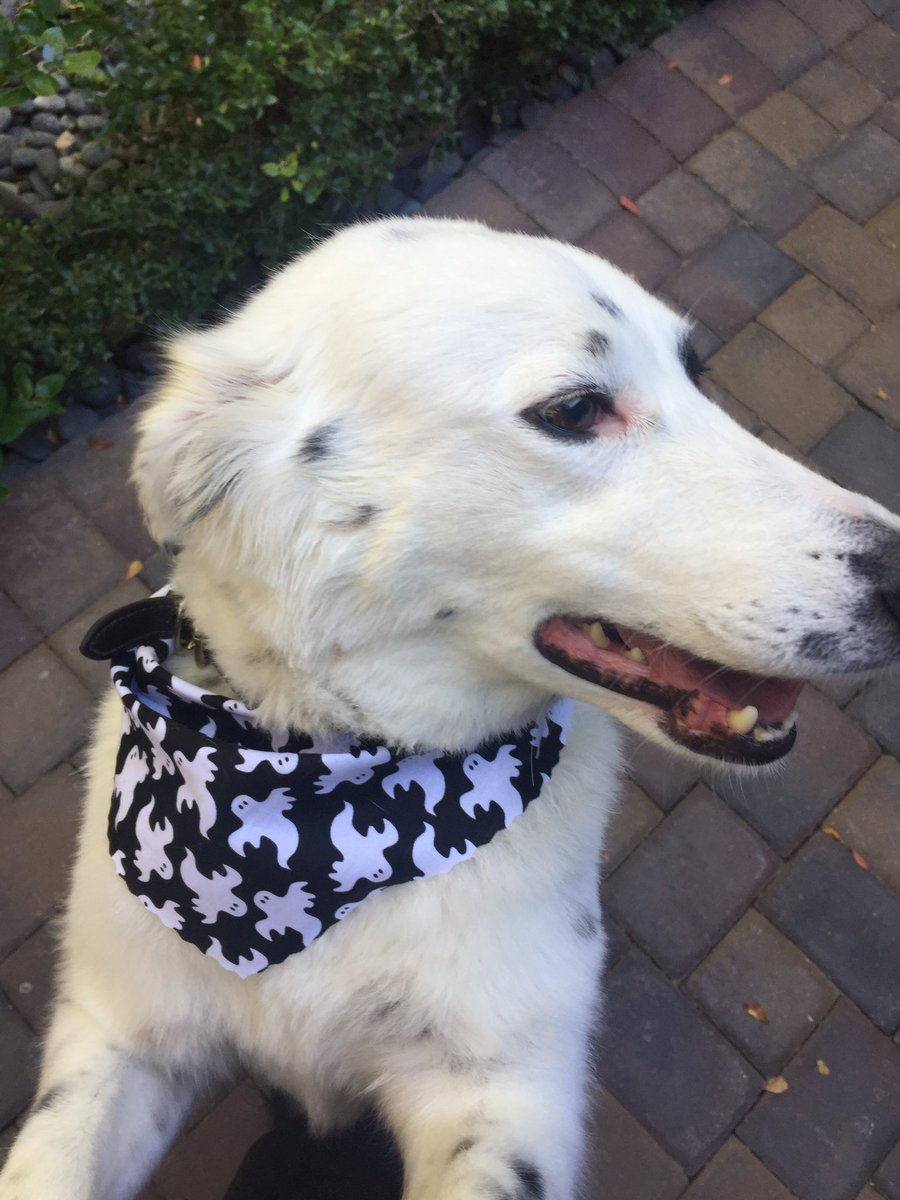 Zak Bagans On Twitter The Groomers Gave Gracie A