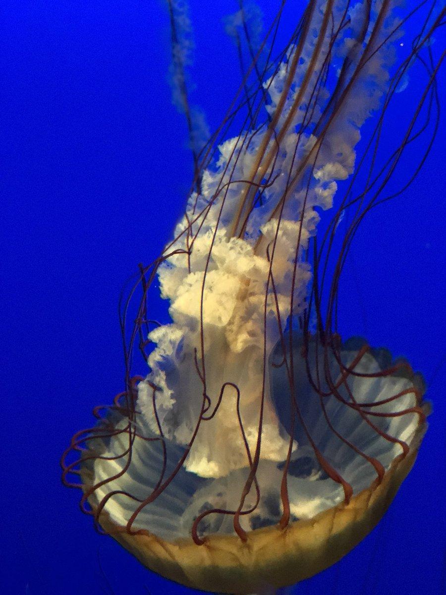 jellyfish hashtag on twitter