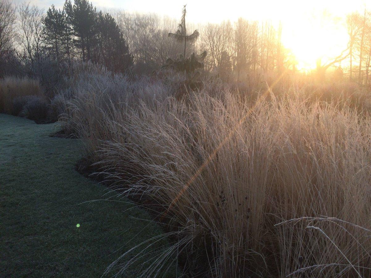 100 winter garden grassing alan titchmarsh u0027s tips on