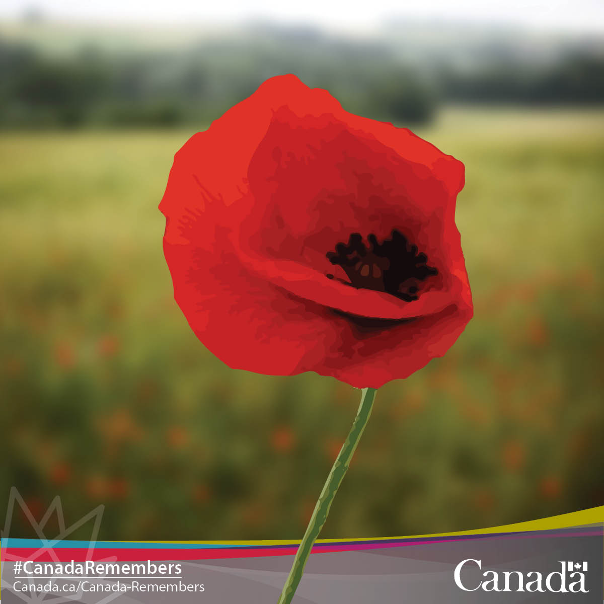 Veterans Affairs Ca On Twitter Its Time To Pick Up Your Poppy