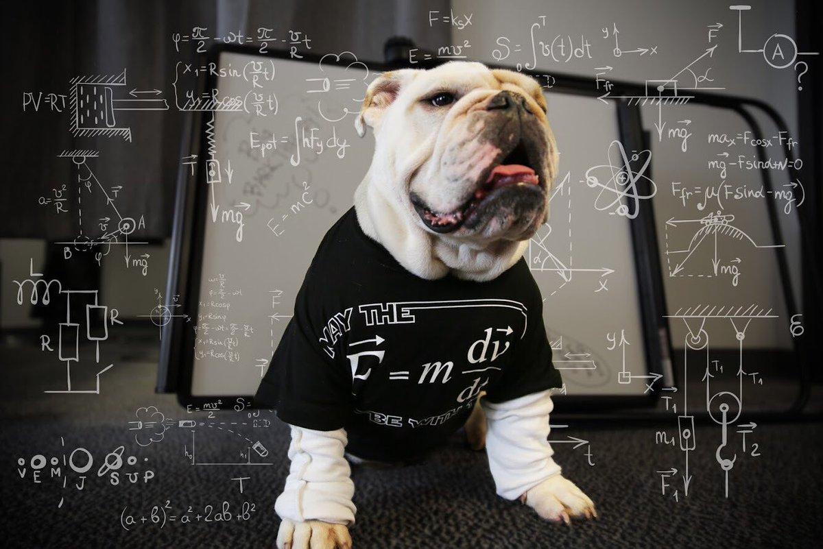 wag the dog theory