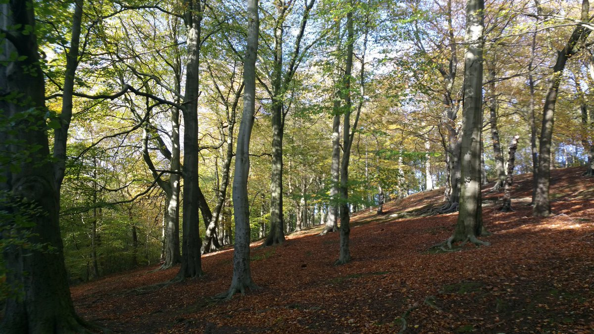 Gledhow valley woods