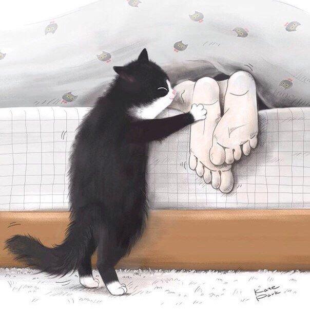 Доброе утро прикольные картинки с котом, картинки