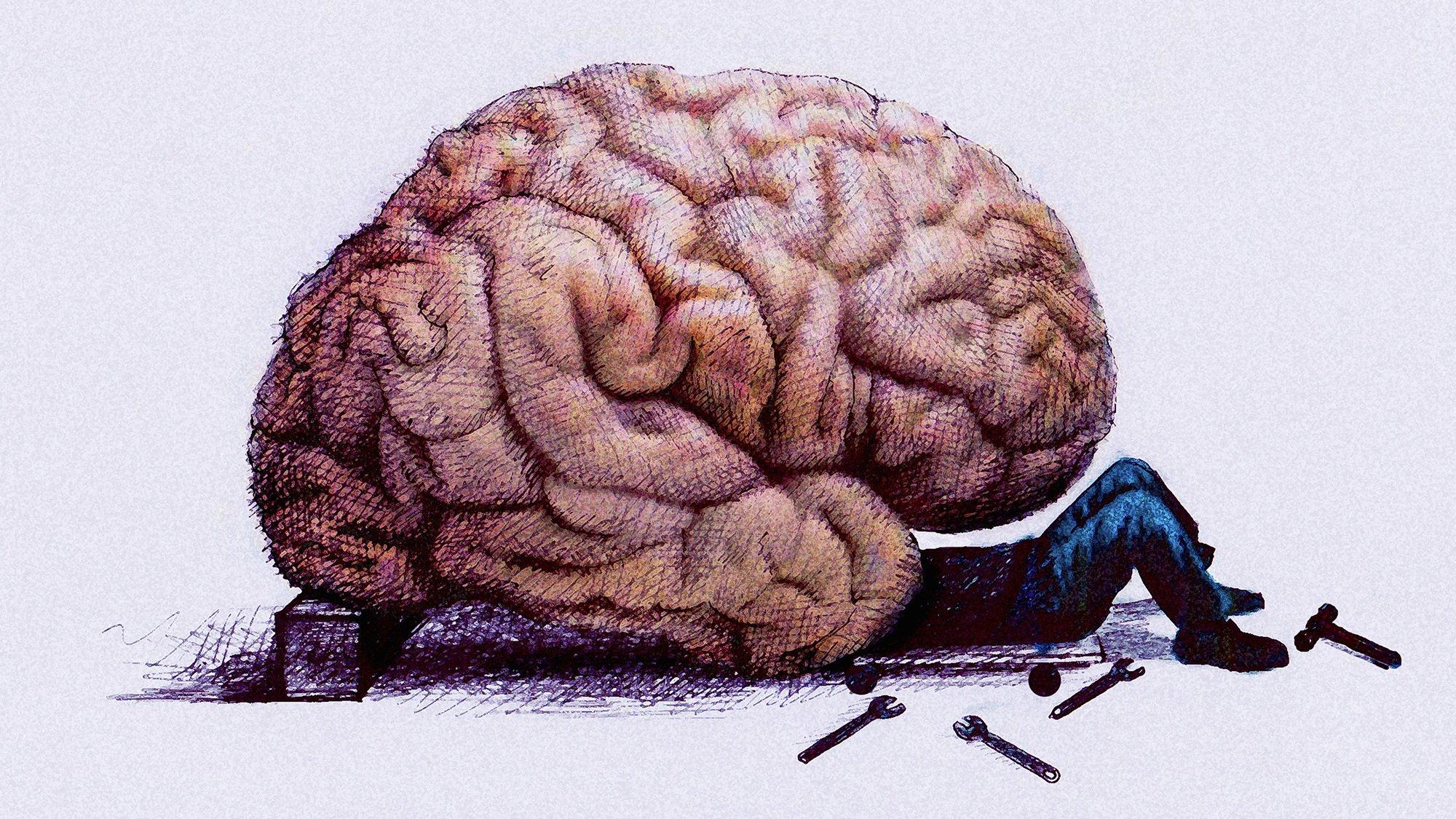 Полный, веселые картинки мозга