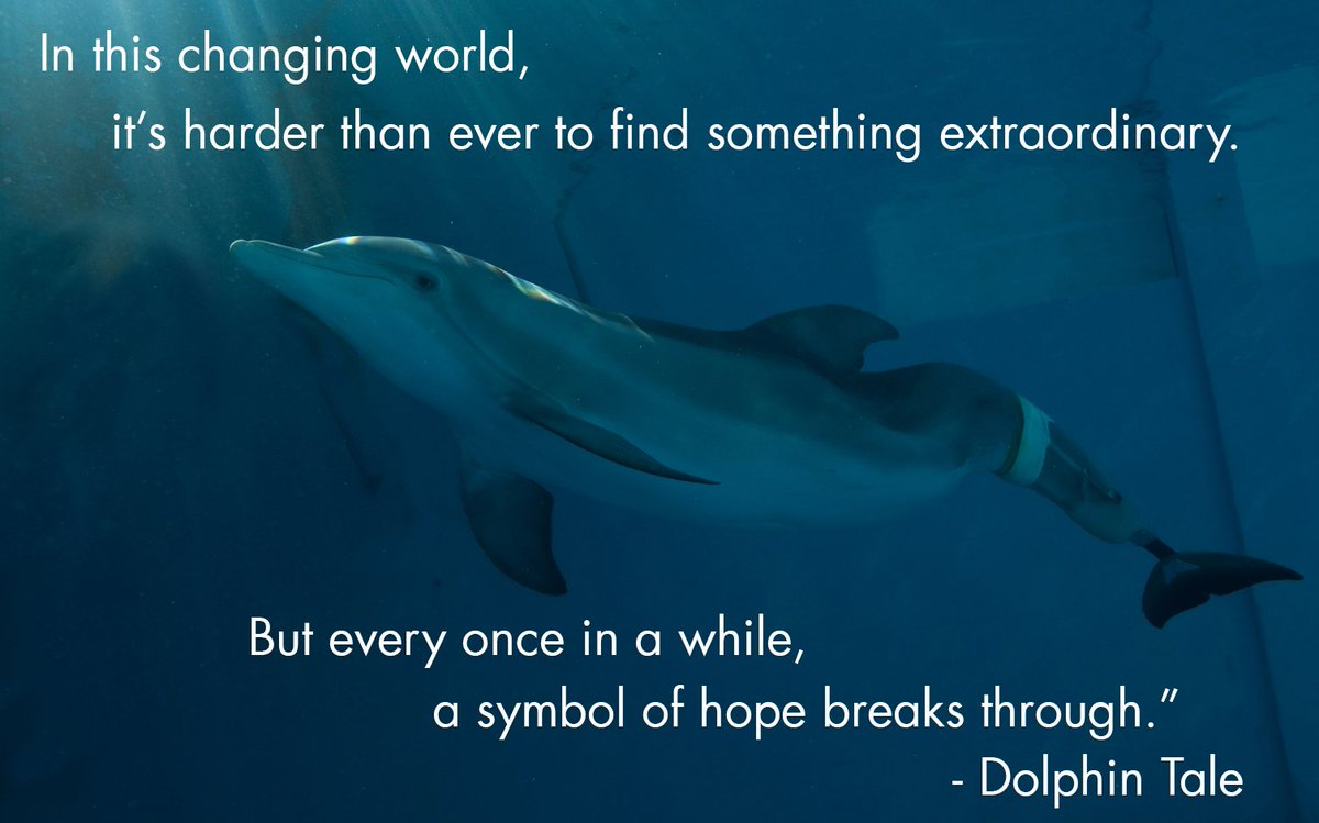 winter dolphin winterdolphin twitter