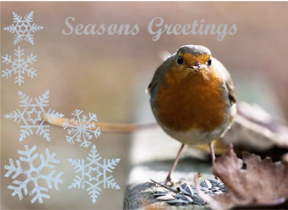 test Twitter Media - Check out our #christmas cards and calendar on our website, new stunning designs! https://t.co/8nQdhGYvOy https://t.co/MqHuuRRNoE