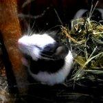おはようございます。上野動物園開園です。口元はもぞもぞ動いているのですが、目がどうしても開かないよう…