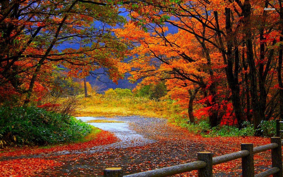 Save a book to your #eLibrary &amp; take your device anywhere! No wifi needed = #fallfoliage<br>http://pic.twitter.com/7bKCmhS1BZ