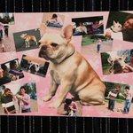 先程のツイートの写真の後ろにあった、草彅さんの愛犬、くるみちゃんの写真ボード!!こっそりここだけで一…