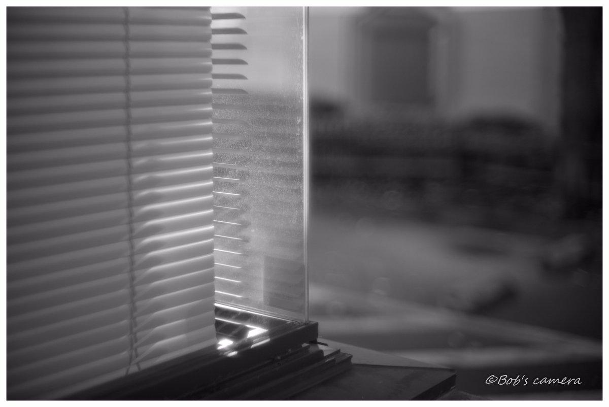 LEICA M MONOCHROM(Typ246)  Zunow 50mm f1.1 (L) Black  「優しい光」 #flickr