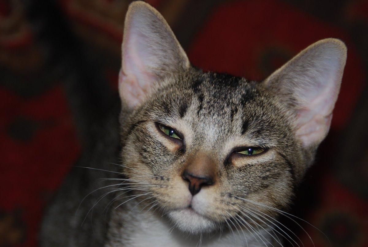 alley cat allies alleycatallies twitter