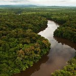 The largest ever tropical reforestation is planting 73 million trees https://t.co/1A4b6epXIm