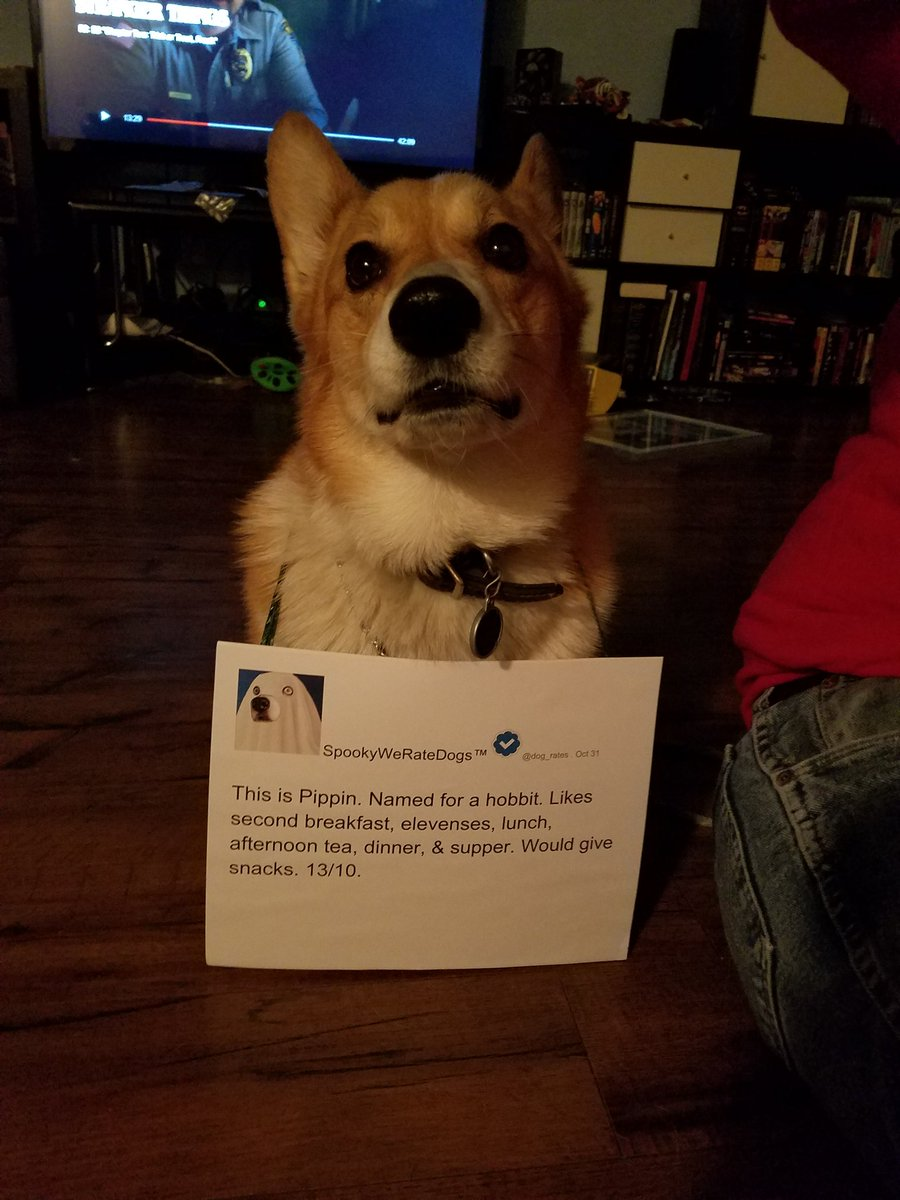 weratedogs dog rates twitter