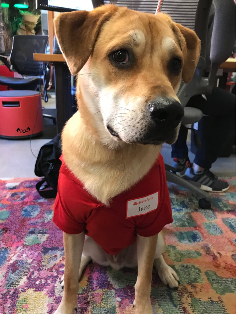 Weratedogs On Twitter This Is Jake From State Farm She Sounds Hideous But He S A Guy So 13 10 Would Never Hang Pup On