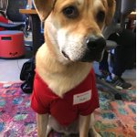 This is Jake from State Farm puppy stories