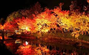 #Cool_Japan #japan #trip #travel #beauty #nippon
