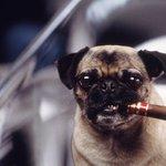 """俺の名前はフランク。コードネームは""""F""""だ。#犬の日 pic.twitter.com/7lSZLfB…"""