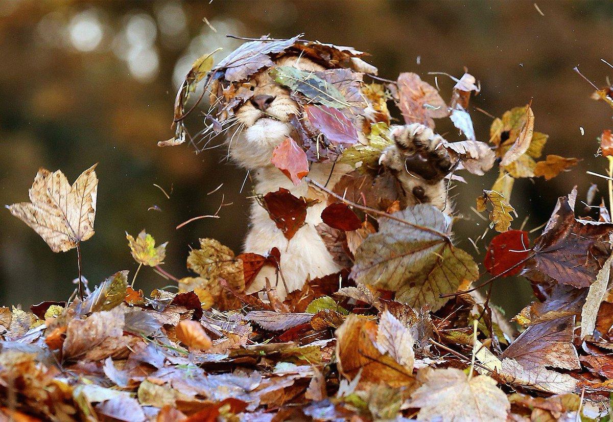 Картинки с веселой осенью