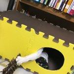 アイデア猫ハウス。中はあったか、作るの簡単、コスパ最高で猫も大満足!