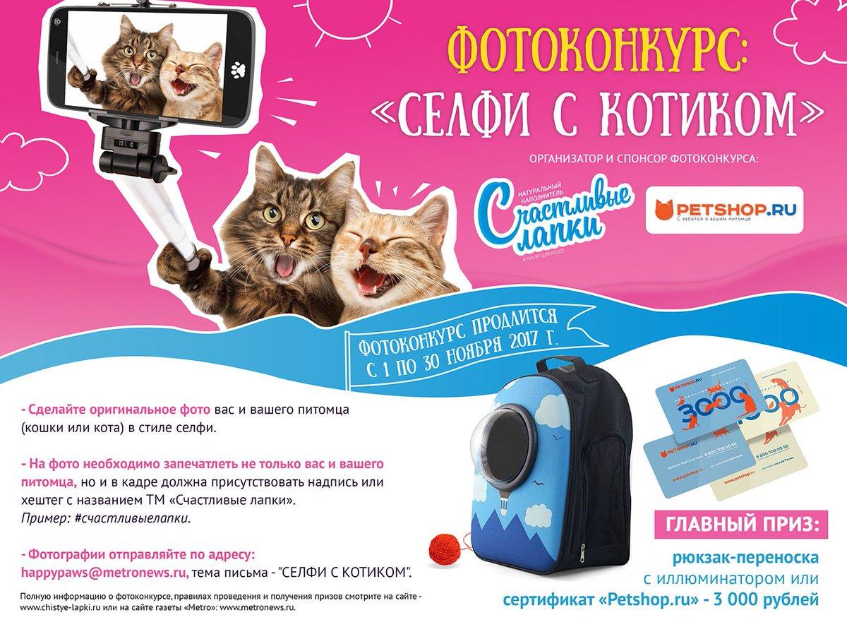конкурсы фотографий кошек отметить, что красотка