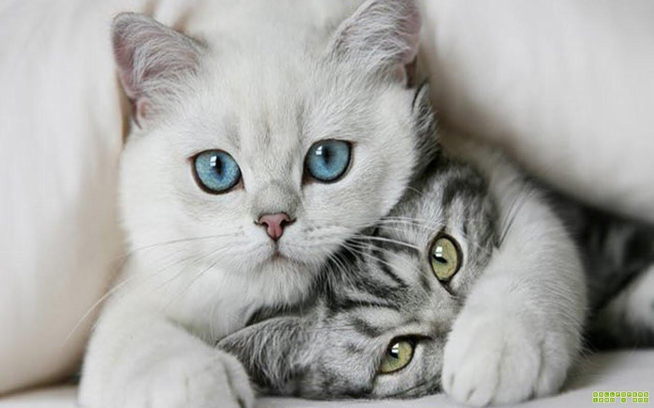 Днем, картинки с котами и надписями про любовь